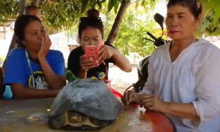 """คอหวยเมืองช้างฮือฮา! เต่ายักษ์ """"ปู่ตา"""" โผล่ให้โชค"""